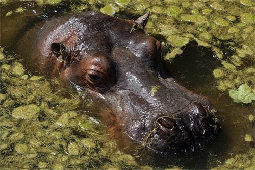 59 - Zoo de Maubeuge
